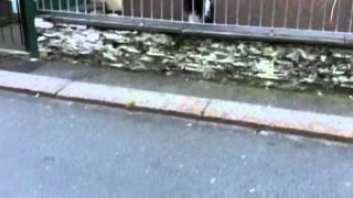 さーて今日も人間釣ってみっか。ボールを路上に転がし通行人と遊んでもらう賢い犬