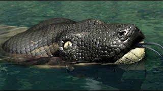 Top 7 Especies mas Terroríficas del Río Amazonas 2018
