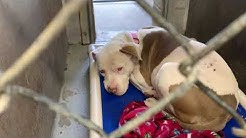 MARICOPA COUNTY ANIMAL SHELTER PHOENIX ARIZONA