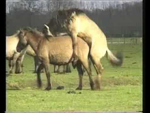 baby pferde