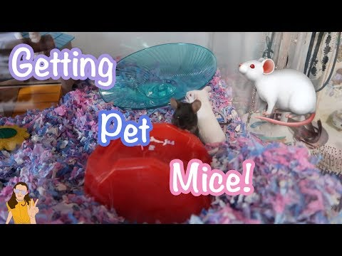 GETTING PET MICE! 🐁 | Kelli Maple