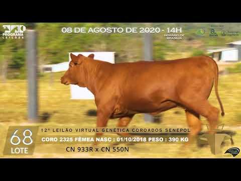 LOTE 68 CORO 2325