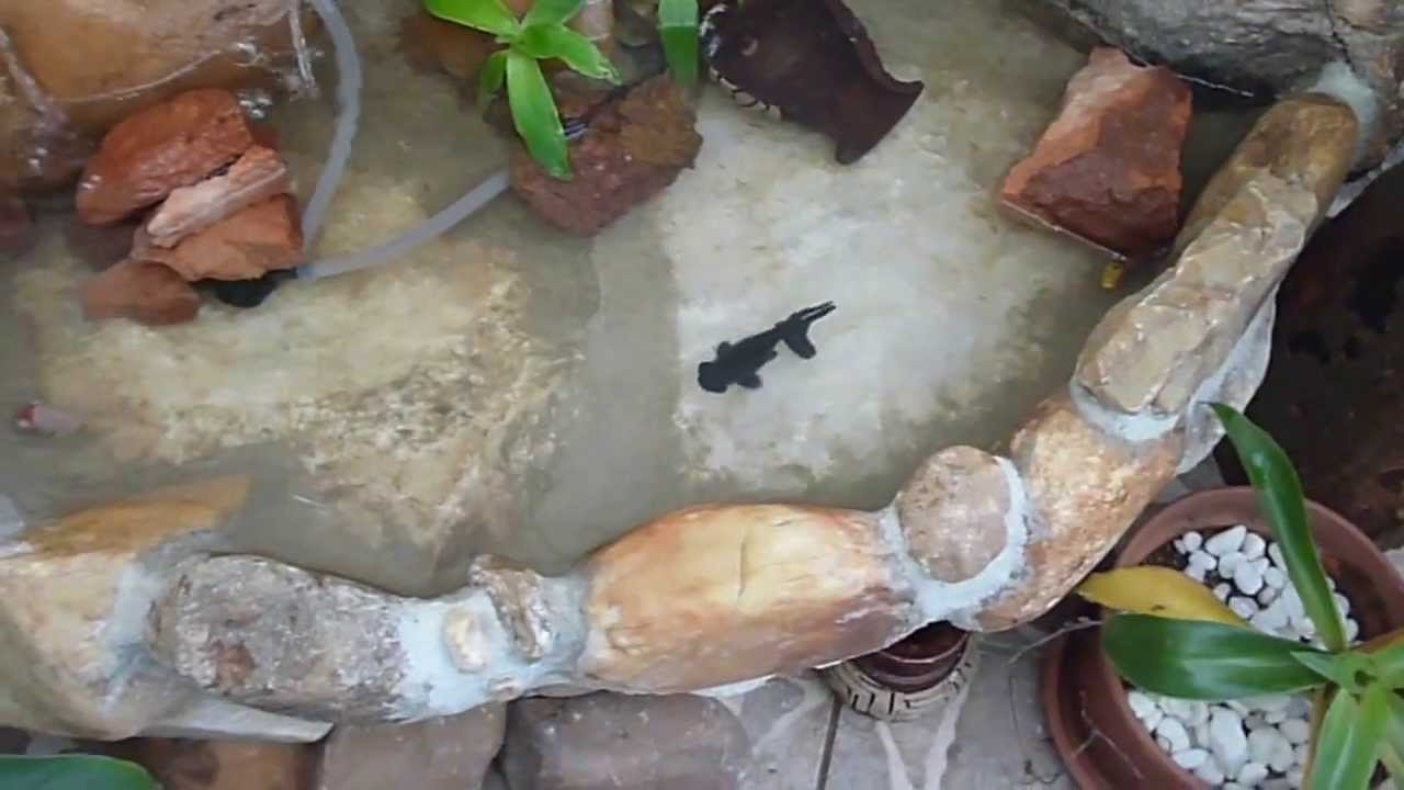 pedras jardim baratas : pedras jardim baratas:Lagos De Fontes Para Jardim