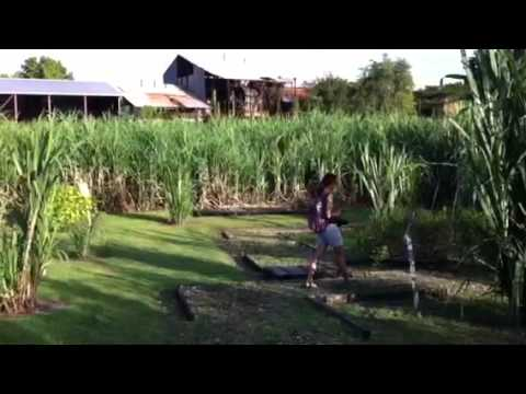 Trip Guadeloupe - octobre 2011