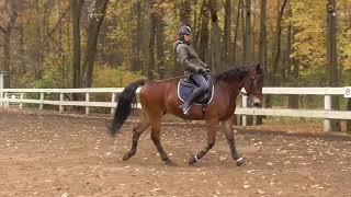 Учим лошадь выходить на повод. Как поставить собранную рысь.
