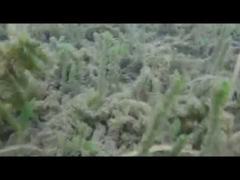 scuba-diving-crystal-river,-fl
