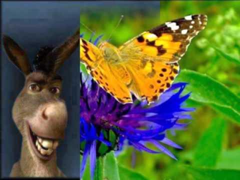 Con i fiori e frasi x amiche e amici youtube for Immagini fiori autunnali