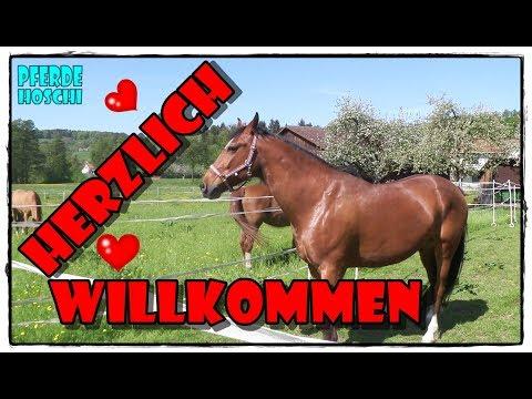 Herzlich Willkommen DON ❤️ Das neue Pferd kommt | Pferde Hoschi