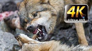 Киевский зоопарк / Kiev Zoo / wild animals 4K