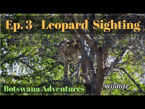 Botswana Adventures: Ep3/5 - Leopard Sighting (Chobe River Front)