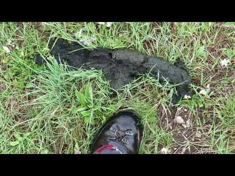 Hiking to spot Grizzly bear in the Yellowstone ecosystem