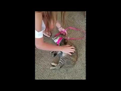 Cat Hates Cardio || ViralHog