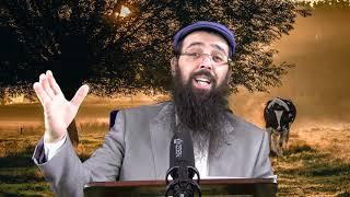 הרב יעקב בן חנן -כל יהודי ערב לחברו