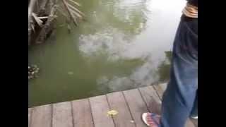 memancing ikan sumpit di sabak aur, muar, johor