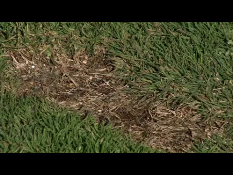 Prairie Yard & Garden: Turf Maintenance