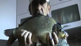 Вот такая рыбка!