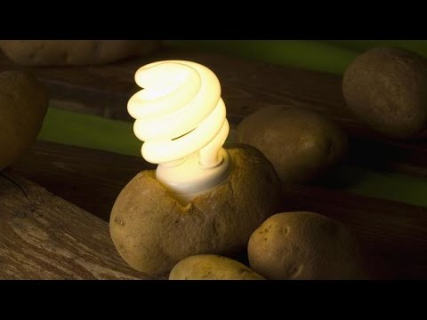 Potato And Light Bulb Science Project: Make Electricity from Potatoes | Science News,Lighting