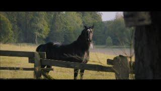 Фильм для всей семьи Восточный ветер 4 Легенда о Воине