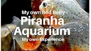 A Review on my Piranha Aquarium(Tamil)