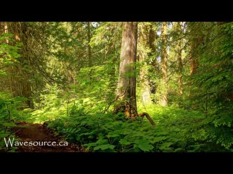 Earth Elemental Healing 432Hz Music ~ Grounding, Growth, Prosperity, Strength