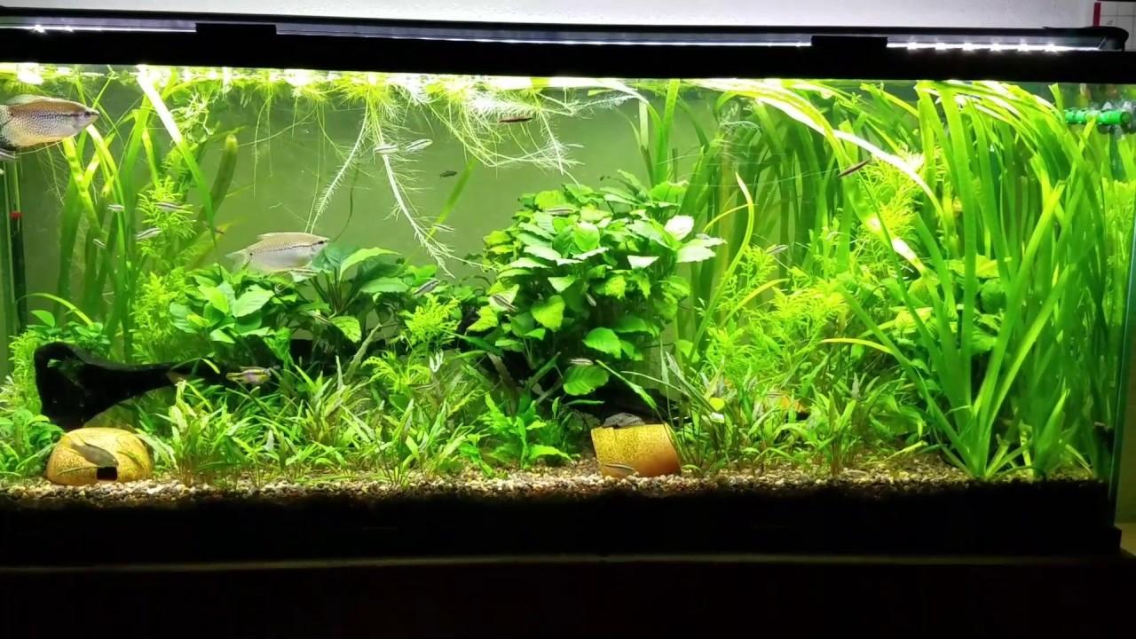 low tech planted tank lighting | Decoratingspecial.com