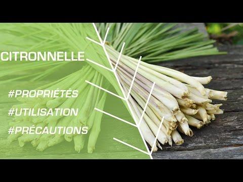 Comment Utiliser La Citronnelle ? - Phytothérapie