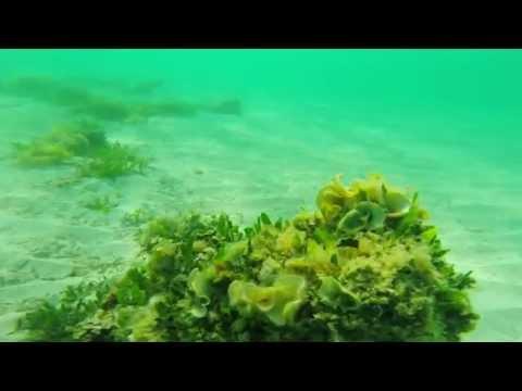 Snorkel punta negra - alcudia