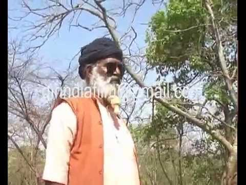 Rare asiatic lion area in special polling station for a lone voter in the middle gir forest