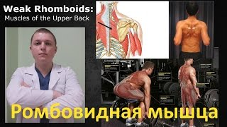 Ромбовидная мышца. Упражнения. Осанка. Боль в спине. Rhomboid Muscles