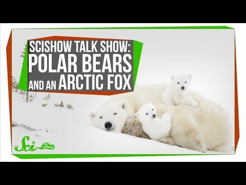 Studying Polar Bears from a Monster Truck | SciShow Talk Show
