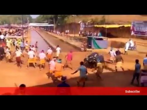 Kambala-Kakkepadav-2016-Tulunadu (ಕಂಬಳದ ಓಟ)