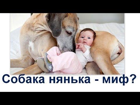 Мифы и правда о дружбе ребёнка и собаки