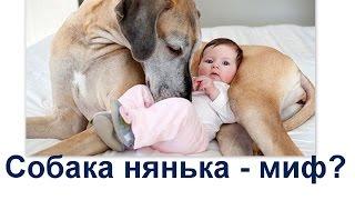 миф собака нянька  Какие собаки няньки