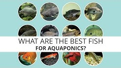 What are the best fish for Aquaponics?