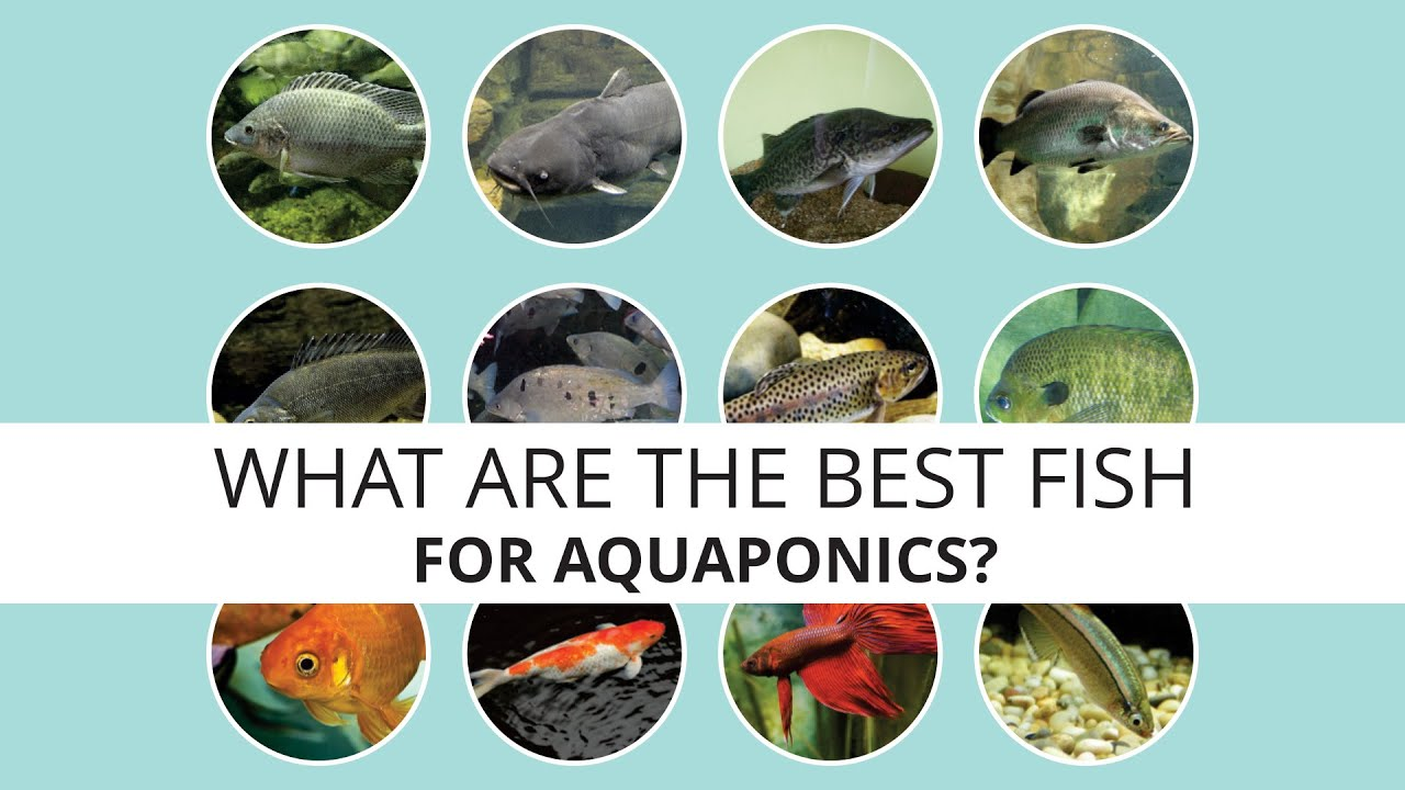 what is the best fish to