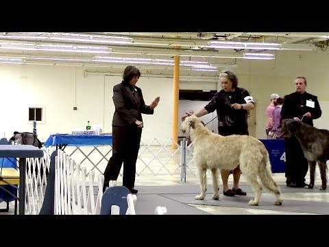 2-24-18 South Arkansas Kennel Club - Irish Wolfhounds