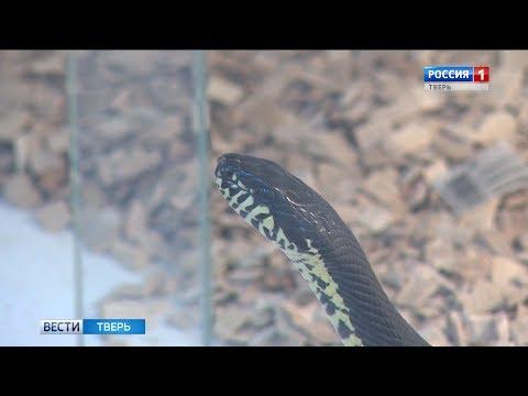 В Тверской области активизировались ядовитые змеи
