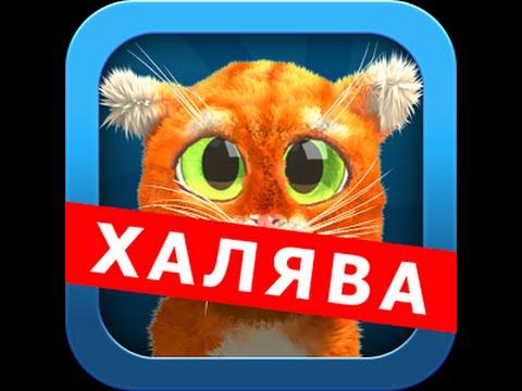 Крутые коты игра