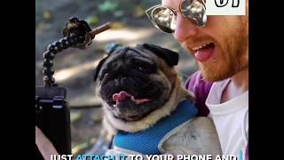 Best Dog Selfie Stick For Pet Lovers (2019)