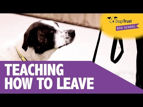 Teaching Your Dog To Leave | Dogs Trust Dog School