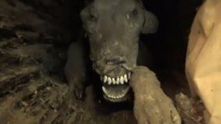 Stuckie the Mummified Dog