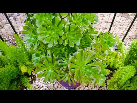 Take A Tour Of The Container Plants In My Desert Garden /JoyUs Garden