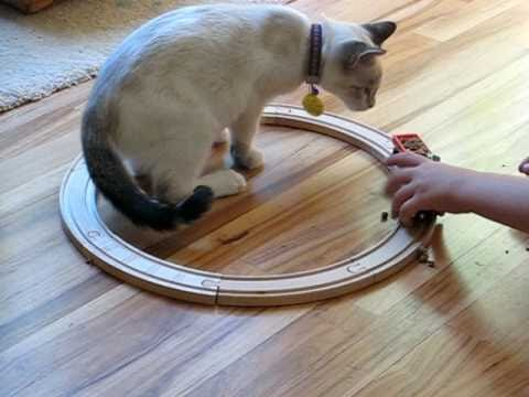 Az0n the cat and the train