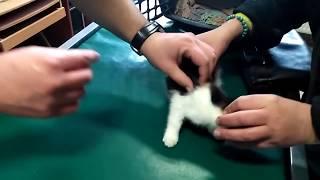 Chora koteczka wizyta u weterynarza