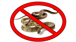 Another Round of Snake Bans #LaceyAct
