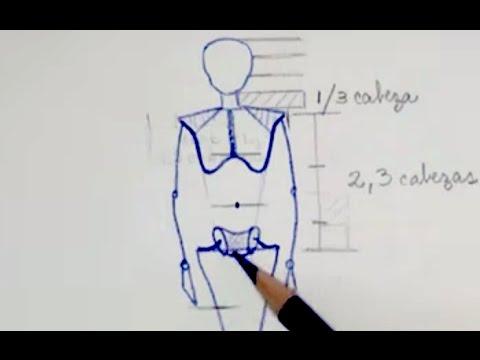 ESTRUCTURA BÁSICA DEL CUERPO HUMANO - PROPORCIONES - YouTube