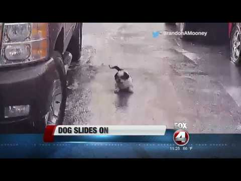Dog Slides Down Icy Driveway