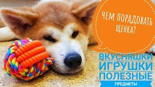 Чем порадовать щенка?  Уход, кормление, игрушки. Акита ину.