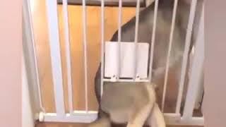 Побег животных из клеток