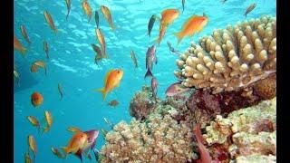 плаваем на коралловом пляже_ последние дни в Египте